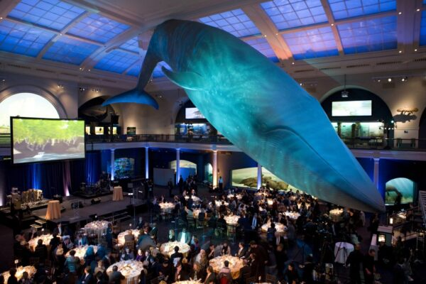 Champions of the Earth Whale at Natural History Museum New York