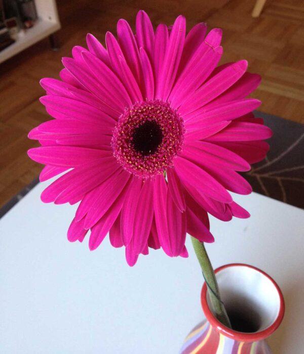 Pink Flower at JMP Launch